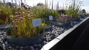 Augustenborg Botanical Roof Garden