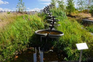 Augustenborgs Botaniska Takträdgård
