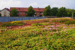 Technical visits on green roofs and green walls