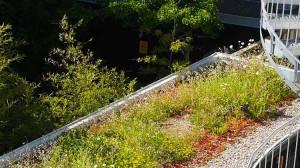 Urbana Ekosystemtjänster – i planering och praktiken